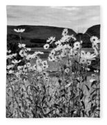 Daisies By The Roadside At Loch Linnhe B W Fleece Blanket