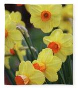 Dallas Daffodils 01 Fleece Blanket
