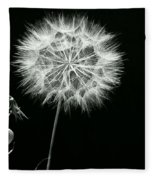 Dandelion Thirty Six Fleece Blanket