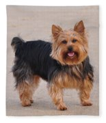 Dapper Dog Fleece Blanket
