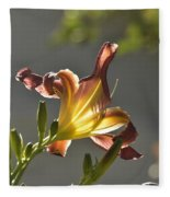 Dark Red Day Lily With Sun Shining Through I Fleece Blanket