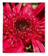 Dark Red Gerbera Daisy Fleece Blanket