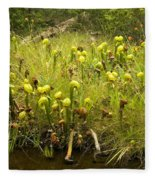 Darlingtonia Plants Grow Beside Fleece Blanket