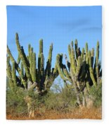 Desert Cacti In Cabo Pulmo Mexico Fleece Blanket