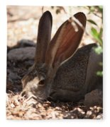 Desert Jackrabbit Fleece Blanket