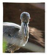 Ding Darling - Juvenile Black-crowned Night Heron Looking At You Fleece Blanket