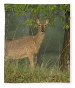 Doe On A Foggy Morning In Wyoming Fleece Blanket
