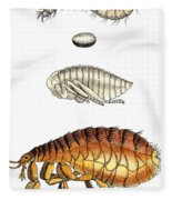 Dog Flea, Lifecycle, Illustration Fleece Blanket