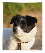 Dog On Sun Fleece Blanket