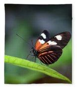 Doris Longwing Butterfly 2017 Fleece Blanket