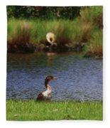 Double-crested Cormorant 2q Fleece Blanket