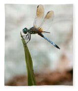 Dragonfly At Cypress Gardens Fleece Blanket