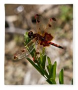 Dragonfly Resting On The Green Fleece Blanket