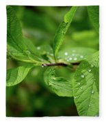Droplets On Spring Leaves Fleece Blanket