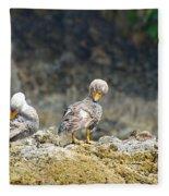 Ducks On A Rock Fleece Blanket