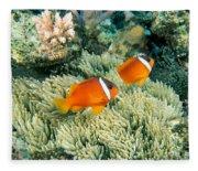 Dusky Clownfish Fleece Blanket