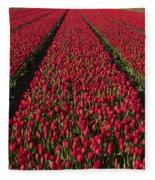 Dutch Tulips Second Shoot Of 2015 Part 1 Fleece Blanket
