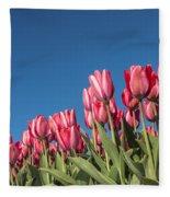 Dutch Tulips Second Shoot Of 2015 Part 8 Fleece Blanket