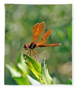 Eastern Amber Wing Dragonfly Fleece Blanket