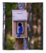 Eastern Bluebird Entering Home Fleece Blanket