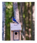 Eastern Bluebird Perched On Birdhouse 2 Fleece Blanket