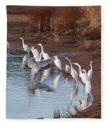 Egrets Gathering For Fishing Contest. Fleece Blanket