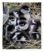 Egyptian Goose Alopochen Aegyptiacus Fleece Blanket