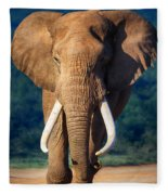Elephant Approaching Fleece Blanket