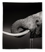 Elephant Bull Drinking Water - Duetone Fleece Blanket