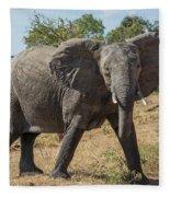 Elephant Crossing Dirt Track Facing Towards Camera Fleece Blanket