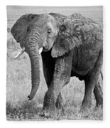 Elephant Happy And Free In Black And White Fleece Blanket