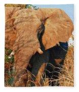 Elephant On Approach Fleece Blanket
