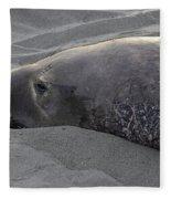 Elephant Seal 5 Fleece Blanket