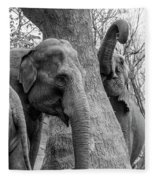 Elephant Tree Black And White  Fleece Blanket