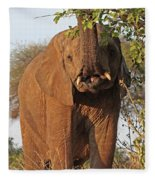 Elephant's Supper Time Fleece Blanket