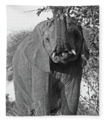 Elephant's Supper Time In Black And White Fleece Blanket