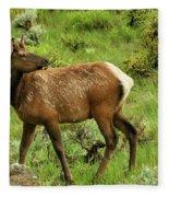 Elk Doe Fleece Blanket