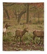 Elk In The Early Morning Fleece Blanket