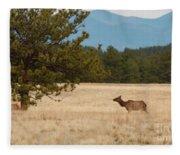 Elk In The Fossil Beds Fleece Blanket
