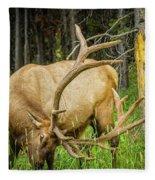 Elk In The Woods Fleece Blanket