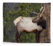Elk Looking Back Fleece Blanket