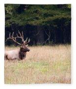Elk Sitting Down Fleece Blanket