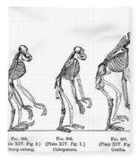 Ernst Haeckel, Evolution Of Man, 1879 Fleece Blanket