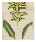 Euonymus Japonica Aurea Variegata, Maranta Micans Fleece Blanket