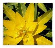 Euphorbia Wallichii Fleece Blanket