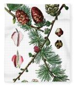 European Larch, Pinus Larix Fleece Blanket