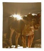 Evening's Light Fleece Blanket
