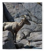 Ewe Bighorn Sheep Fleece Blanket