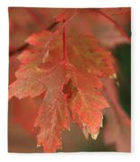 Fall Color In Softness Fleece Blanket