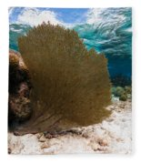 Fan-tastic Sea Web Fleece Blanket
